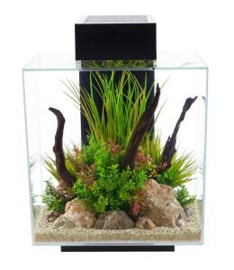 Garnelen Aquarium Anfänger – Teil 1