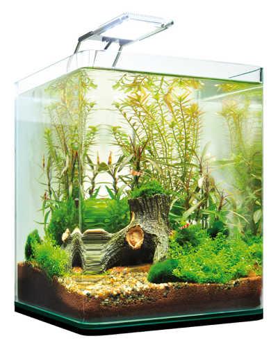 Beste Garnelen Aquarium Dennerle Complete+ LED